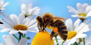 Продукты пчеловодства против гриппа. Инструкция по применению.