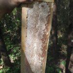 """Мёд в сотах """"Северное разнотравье"""". Урожай 2021 года"""